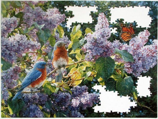 Bluebird Lilacs-7