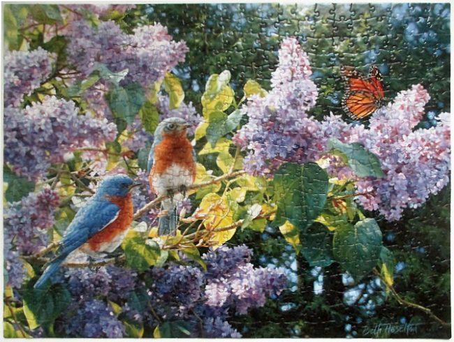 Bluebird Lilacs-8