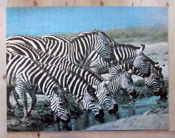 Eight Zebra6