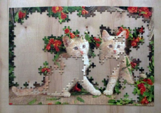 KittensGeraniums3