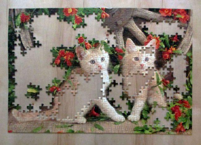 KittensGeraniums4