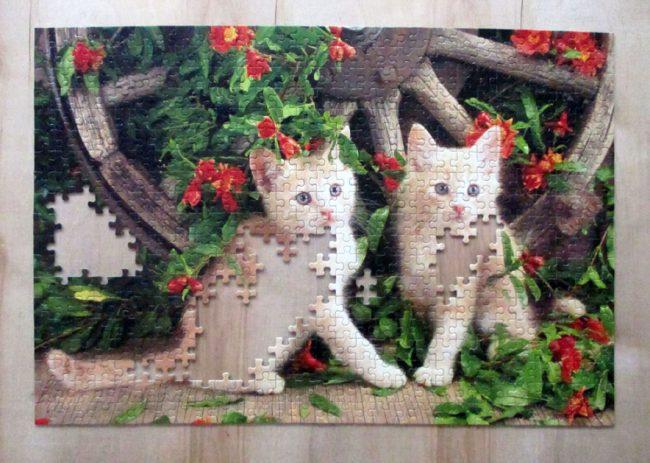 KittensGeraniums7