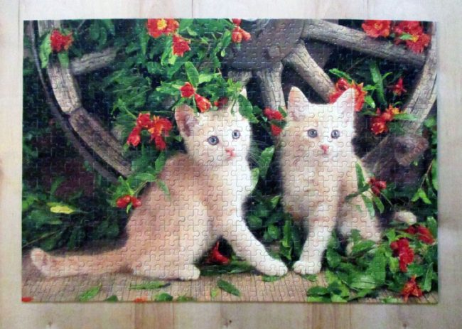 KittensGeraniums8