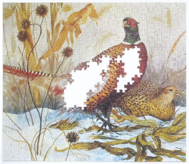 pheasants-7